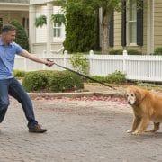 mygearexpert.com-top-tips-for-training-your-dog