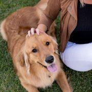 best probiotics for dog